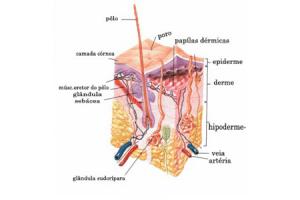 Divisão da pele - Benefícios fisiológicos da massagem   Massagem São Paulo Guarulhos