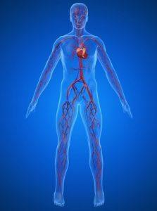 Circulação sanguínea - Benefícios fisiológicos da massagem   Massagem São Paulo Guarulhos